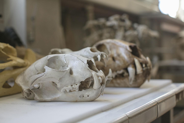 Les collections de vertébrés fossiles et actuels