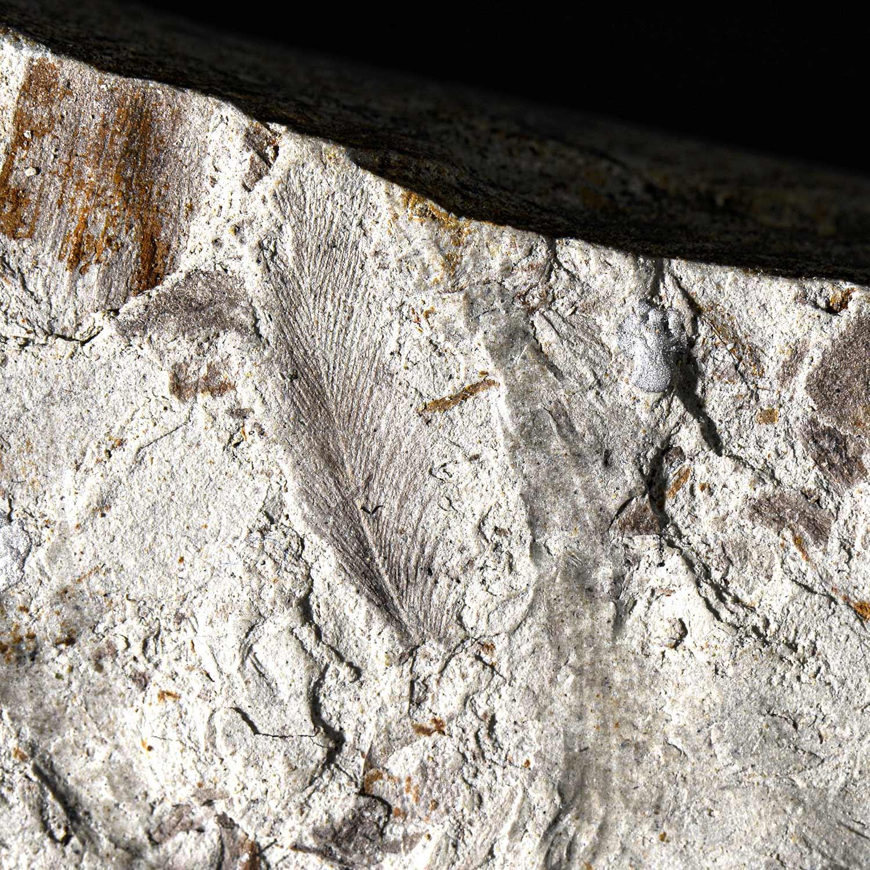 Des plumes de dinosaures fossilisées aux portes de Poitiers